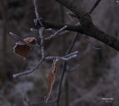#mist #fogg #vorst #frost #winter #macro