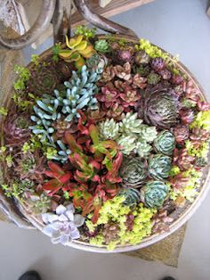 i really want to have a little succulent garden. Oddly enough, succulents don't do well in  my care.