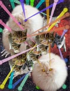 lasers and cats