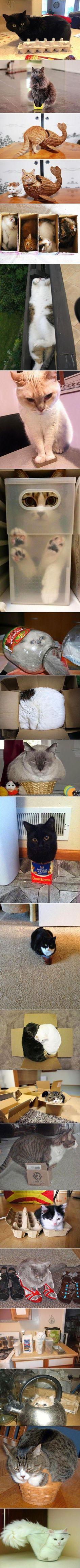 Ein Karton...da muss ich rein...Katzen...immer