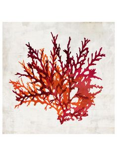 Pomegranate Coral I Canvas Giclee