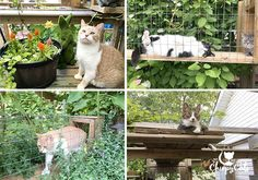 Building a catio your cat will love does not have to be complicated. Start small and add ramps and climbers as you go along. You will get plenty of input from your feline design crew! #catio #catenrichment Matilda, Cat Has Fleas, Cat Brain, Cat Years, Outdoor Cat Enclosure, Diy Cat Tree, Cat Playground, Cats Musical, Cat Room