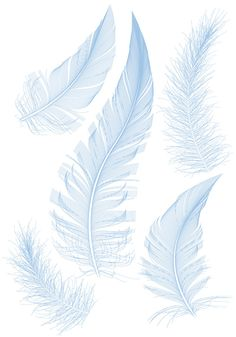 Feather design elements vector Illustration 04 WOW