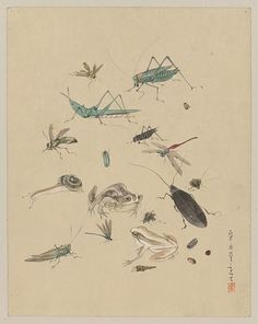 Title: Frogs, snails, and insects, including grasshoppers, beetles, wasps, and dragonflies. Date Created/Published: Between 1800 and 1850. Medium: 1 drawing: color.