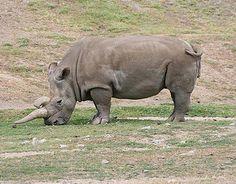 Extinction Species - Recently Extinct Animals List - Pictures of Lost Species - Popular Mechanics