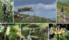 Bergiger Loop mit viel Flora - Irland