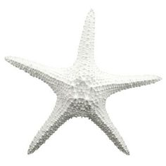 Fetco Home Decor Cruz Starfish Wall Dé Starfish Wall Decor, Coastal Wall Decor, Beach Wall Decor, Coastal Curtains, Coastal Entryway, Coastal Rugs, Coastal Bedding, Coastal Farmhouse, Coastal Furniture