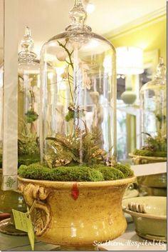 Terrarium in a cloche, in moss, in an urn.