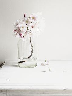 Cosiness | Pastel Haze
