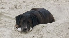 Dog Napping on Beach