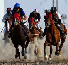 UAE: Purebred Arabian Horse Race in Abu Dhabi #ArabianHorses #Racing #ArabianHorseAssociation