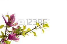 Flower in white Stock Photo
