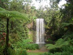 Millaa Millaa Falls, Australia..swimming behind the waterfall - incredible!!