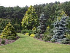 Steve Grubb Planet Conifer Foxhollow Garden September 2010
