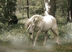 unicorn 5  http://delusional-innocence.tumblr.com