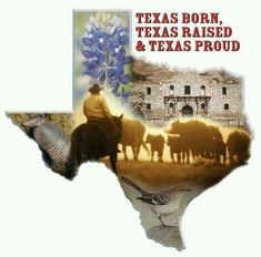 The official candle of Texas! The Texas Bluebonnet! Click here now! http://www.iamatexan.com/texas-bluebonnet/ —