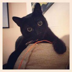 L'immagine può contenere: gatto