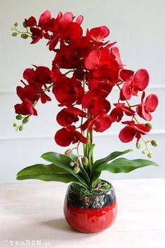 Orchid Flower Arrangements, Orchid Planters, Beautiful Flower Arrangements, Flower Vases, Flower Pots, Beautiful Rose Flowers, Exotic Flowers, Amazing Flowers, House Plants Decor