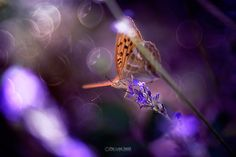 butterfly series by Pier Luigi Saddi on 500px