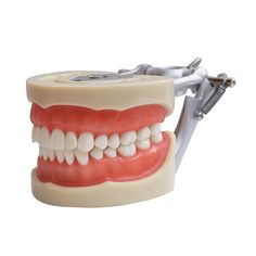 Find More Teeth Whitening Information about 2016 100% High Quality Model Dental…