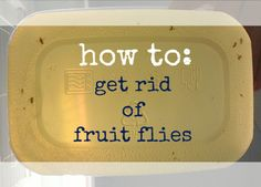 How to get rid of Fruit Flies One cup apple cider vinegar, 1/2 cup dishwashing detergent, splash of wine, soda, anything sugary