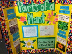 The Adventures of a K/1 Teacher: Fun with Plants