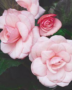 Shade-Loving Plants - Martha Stewart Home & Garden