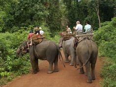elefantenritt