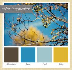 brown blue and yellow gold color palette