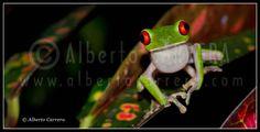 ONE MORE WILDLIFE PHOTOGRAPHY STORY 04  // UNA HISTORIA MÁS DE FOTOGRAFÍA DE NATURALEZA 04