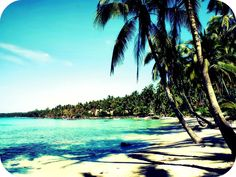 Florida no seaweed, no jellyfish, just beautiful, clean coral reef<3