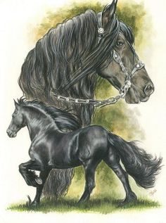 Friesian horse drawing by Barbara Keith. Watercolor and colored pencil.
