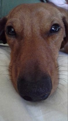 My dog, Tomppa. photo by: Nea-Mari Vallin