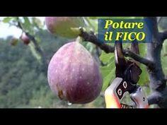 Natura è Bellezza - YouTube Goat Farming, Bonsai Plants, Youtube, Terrazzo, Grid, Pottery, Tutorials, Gardening, Dreams