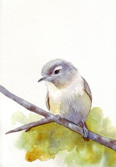 Beautiful bird in watercolor.