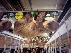 creative advertising in metro, tram, Creative Advertising, Advertising Design, Marketing And Advertising, Diagram Design, Design Inspiration, Outdoor, Animals, Sloths, Naver
