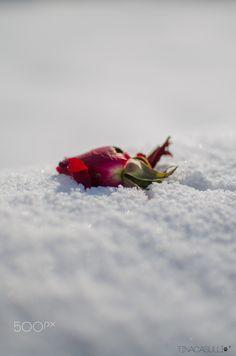 """Natura Morta"" by Tina Casulli"