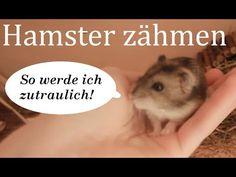 Die 83 Besten Bilder Von Zwerghamster Dwarf Hamsters Hamster Care