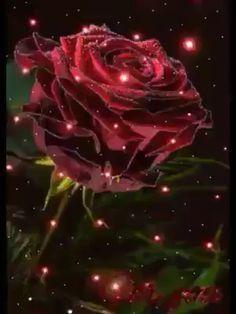 Spring Flowers Images, Beautiful Flowers Pictures, Beautiful Rose Flowers, Flower Pictures, Good Morning Flowers Gif, Good Morning Beautiful Images, Beautiful Gif, Love Wallpapers Romantic, Beautiful Flowers Wallpapers