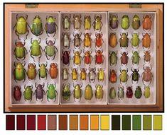 Jeweled scarab beetle inspiration board