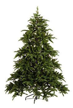 Abies Nordmann 200 cm  Vianočný stromček
