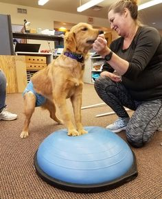 Golden Retriever Rescue Resource - Adopt A Golden Retriever Rescue Golden Retriever Rescue, Foster To Adopt, Shoulder Muscles, Alternative Therapies, Dog Activities, Happy Puppy, How To Raise Money, Snuggles, Ohio