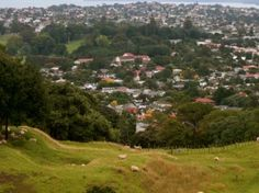 One Tree Hill is in the middle of Auckland, which has over a million people. But there are still sheep on it! And cows! All Blacks, One Tree Hill, Auckland, Cows, New Zealand, Sheep, Middle, River, Vacation