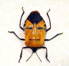 Framed Real Man Face Beetle Great Gift For by REALBUTTERFLYGIFTS, $49.99
