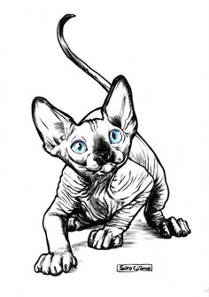 Lately I've been fascinated by sphynx cats, which resulted in me drawing a lot of them. This is one of those drawings, hope you like it