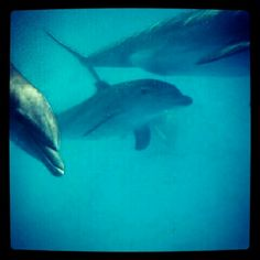 Dolphins are always smiling