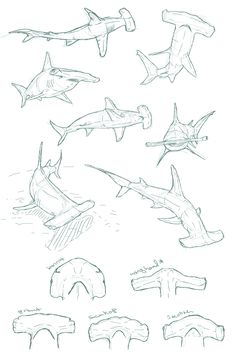 """edemoss: """" Hammerhead sketches I did for a piece about…hammerheads. Super fun. I could twenty pages of shark sketches. And I just might. """""""
