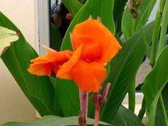 Les lundis de flowerpower2015 - Bernieshoot photographie littérature chronique avis interview test