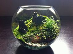 TERRARIUM :: Click for more pix of Terrariums by Auckland, NZ company, bioattic. Use of unique rocks, geodes, moss & minerals creates such a stunning end result.