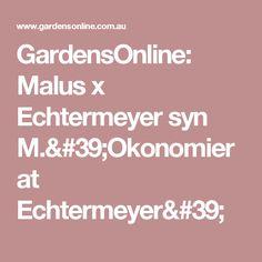 GardensOnline: Malus x Echtermeyer syn M.'Okonomierat Echtermeyer'